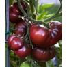 Tomate Negro Criméa Ecologico