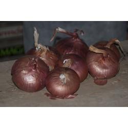 Cebolla Roja Año Ecologica